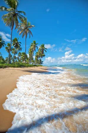 praia: Paradise beach in Praia do Forte, Salvador de Bahia state, Brazil.