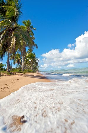 Paradise beach in Praia do Forte, Salvador de Bahia state, Brazil. photo