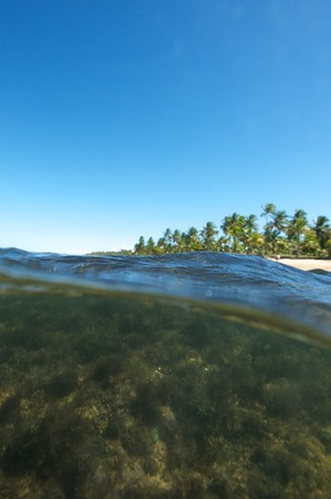 Paradise beach in the Marau Peninsula, Bahia State, Brazil photo