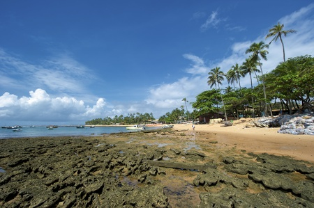 projet: Praia do Forte is a small fishing village 50 miles north of Salvador along the coast road called Coconut Highway - so called because of the many coconut groves along the route. The main attraction in Praia do Forte is the Projeto Tamar turtle sanctuary.