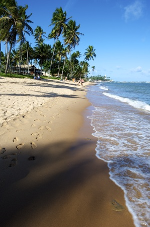 Praia do Forte is a small fishing village 50 miles north of Salvador along the coast road called Coconut Highway - so called because of the many coconut groves along the route. The main attraction in Praia do Forte is the Projeto Tamar turtle sanctuary.
