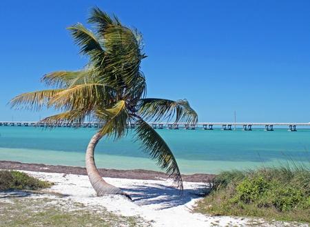 フロリダ州の海外ハイウェーに沿ってヤシの木と青の水