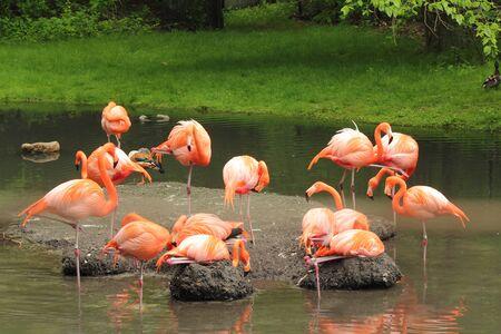 plummage: a gathering of flamingos Stock Photo