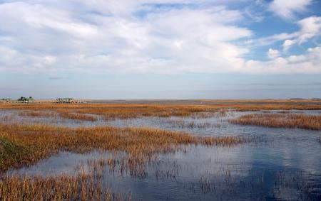 広大な岬ロマン ・国立野生保護サウスカロライナ海岸沿いの青空の下で美しい沿岸湿地 写真素材