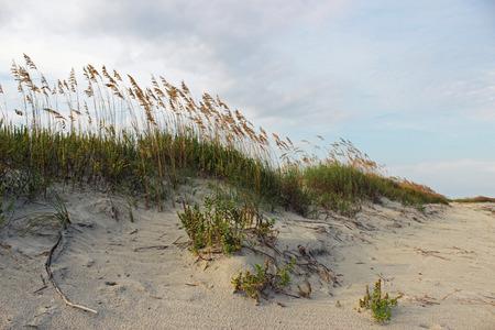 砂丘線海岸沿いの静かなビーチ 写真素材