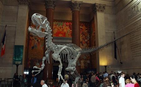 tiran: De verzamelde fossiele overblijfselen van een Tyrannosaurus rex weefgetouwen over bezoekers in de lobby van het American Museum of Natural History in New York. Redactioneel