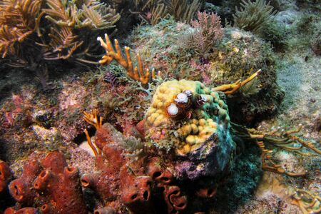 reefscape: Reefscape with Christmas tree worms and coral in Florida Keys National Marine Sanctuary