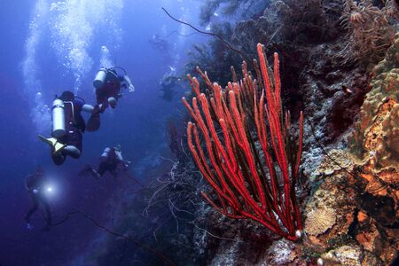 スキューバ ダイビングは、青のエッジとキュラソー オランダ カリブ海のサンゴ礁と呼ばれる急落の壁を探る。