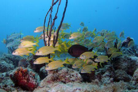 熱帯のサンゴ礁の魚の群れアルバ島のカリブ海の島の難破。