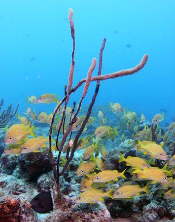 aruba: A school of fish on a tropical reef  shipwreck off of the Caribbean island of Aruba.
