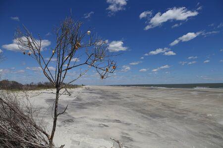 サウスカロライナ海岸沿いの砂丘のスクラブブラシは、貝殻で飾られています。