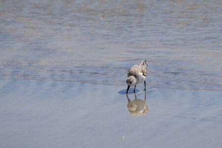 サウスカロライナ海岸沿いの潮のプールのそばの小さな砂場。