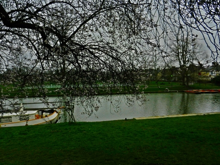 Tree lined view of River Cam in Cambridge England Imagens