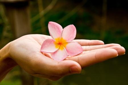 Flower in hand photo