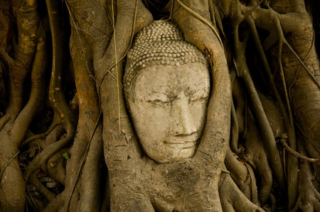 Head of wood Buddha in The Tree Roots, Thailand Stock Photo