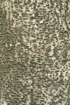 Tree bark texture  Stock Photo - 12955304