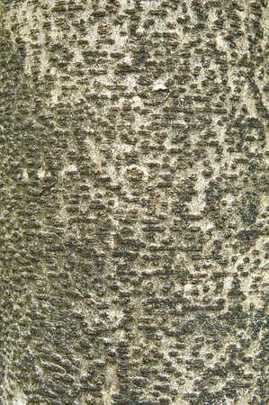 Tree bark texture Stock Photo - 12955304