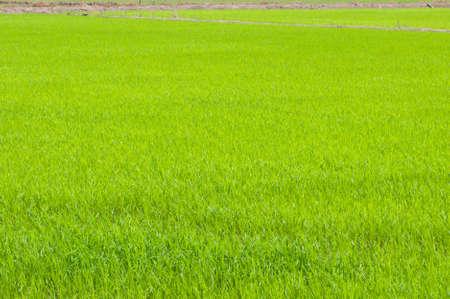 green field Stock Photo - 13123006