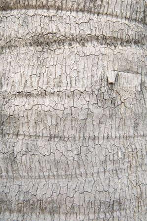 Tree skin photo