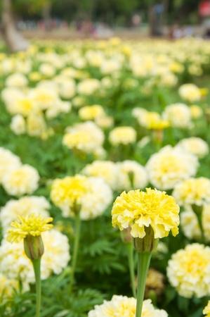 flowers field  photo