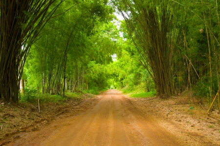 The walkway of bamboo Stock Photo - 13822825