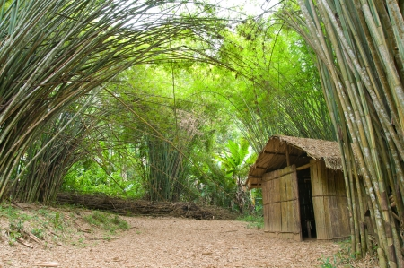 Bamboo house in the jungle  photo