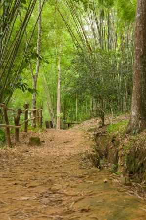A path leading into a tropical garden photo