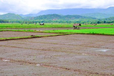 rice fields in northern Thailand  photo