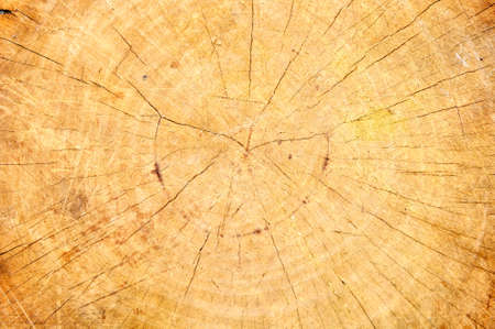 Old wood cut texture Stock Photo - 14571533