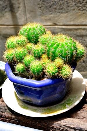 Cactus Stock Photo - 14571422