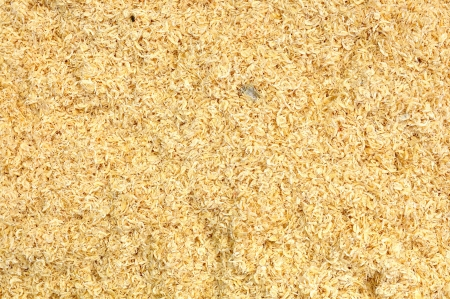 Small dried shrimp photo