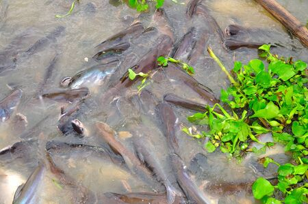 suface: Fishes feeding at water surface