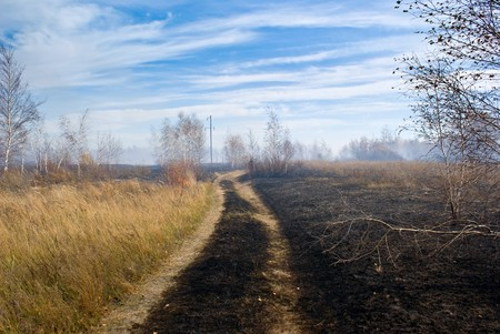 dirt road in the forest after the fire
