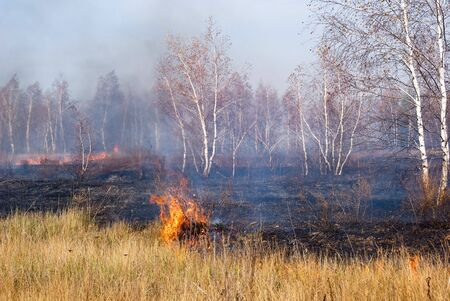 Fire in the dry forest photo