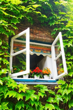 ivy around the open window in rural house