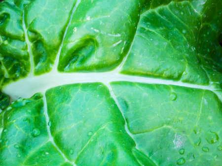 Healthy Green Swiss Chard Close-up Stock Photo