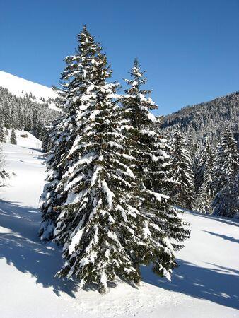 st gallen: Swiss alps in winter (St. Gallen, Switzerland) Stock Photo