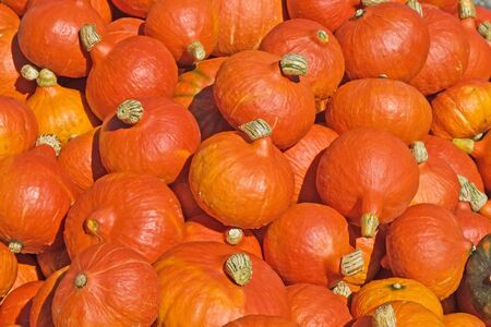 Background made of bright colorful pumpkins photo