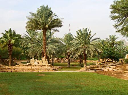 Jardín de palmeras en la ciudad de Riad, Arabia Saudita                                Foto de archivo - 6654124