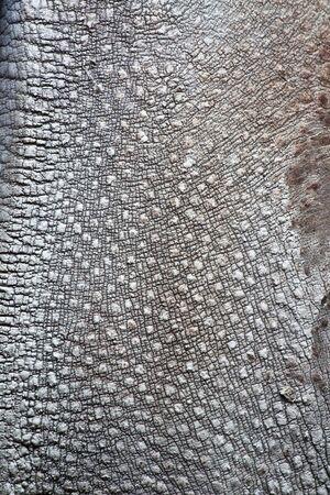 Peau ridée gris épais, rhinocéros  Banque d'images