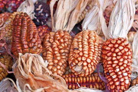 Decorative corn on the autumn market photo