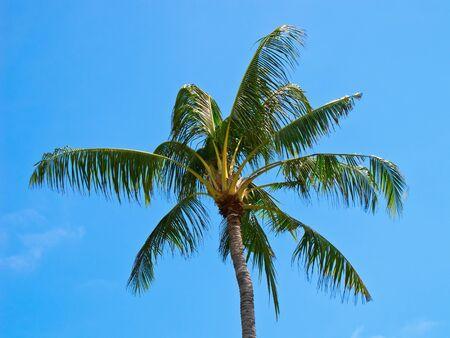 Palm tree against blue sky photo