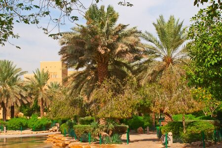 Palm garden near National museum in the Riyadh city, Saudi Arabia                                photo