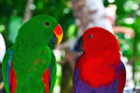 dearness: Birds in love: Pair of lori parrots on the tree Stock Photo