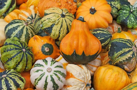 Colorful pumpkins collection on the autumn market Stock Photo - 7765244