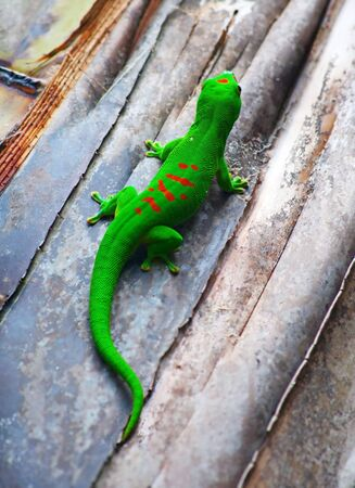 Green gecko on the roof (Zurich zoo) Stock Photo - 8009239