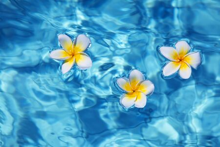 Tropical frangipani flower floating in blue water photo