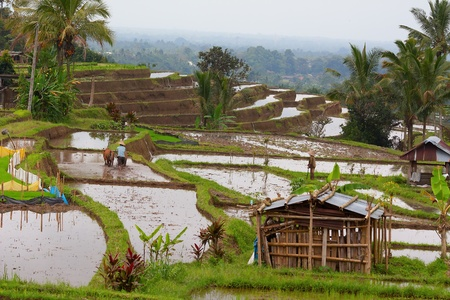 A man working on a terraced rice fields photo