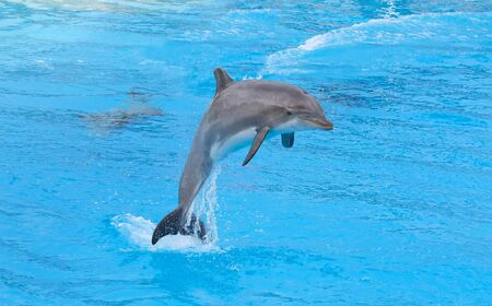 bottlenose: Bottlenose dolphin in the aquarium