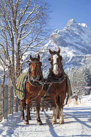mountain hut: Winter in swiss alps (pair of horses in a small village)